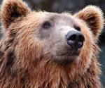 Jak zachować się w przypadku ataku niedźwiedzia? Intruktor RDOŚ wyjaśnia